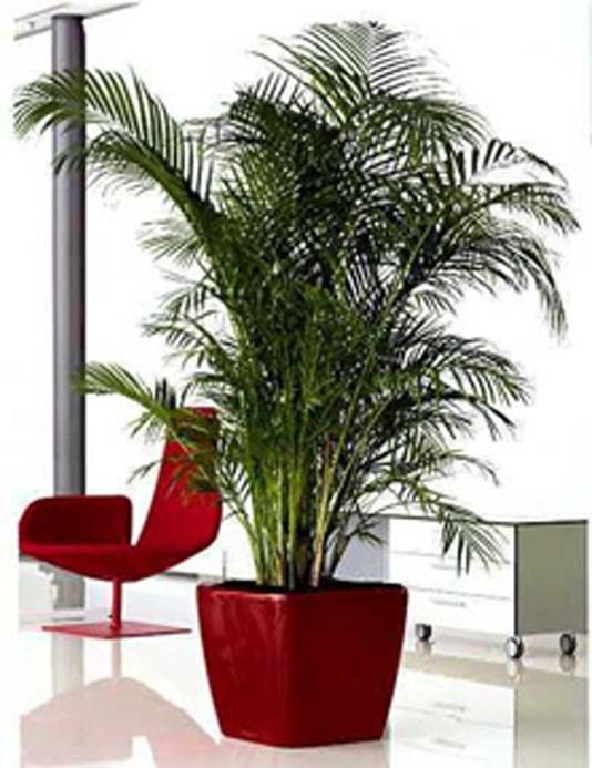 Periodo invernale le piante da interno decorazioni interni for Piante da interno