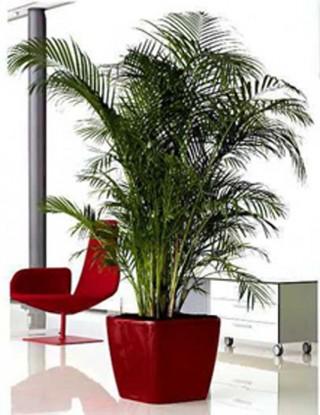 Periodo invernale le piante da interno decorazioni interni - Piante da interno alte ...